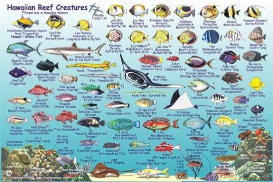 HawaiianIslandsFish